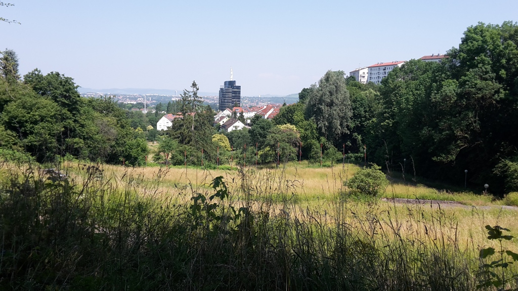 wilde Samen Wanderung am Wartberg in Stuttgart mit Christel Ströbel